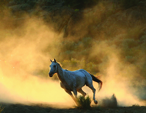 Image result for image of galloping heart