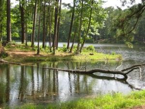natural life and death at the lake