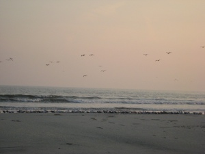 I look back at the birds in flight with the 'dates' in their beaks