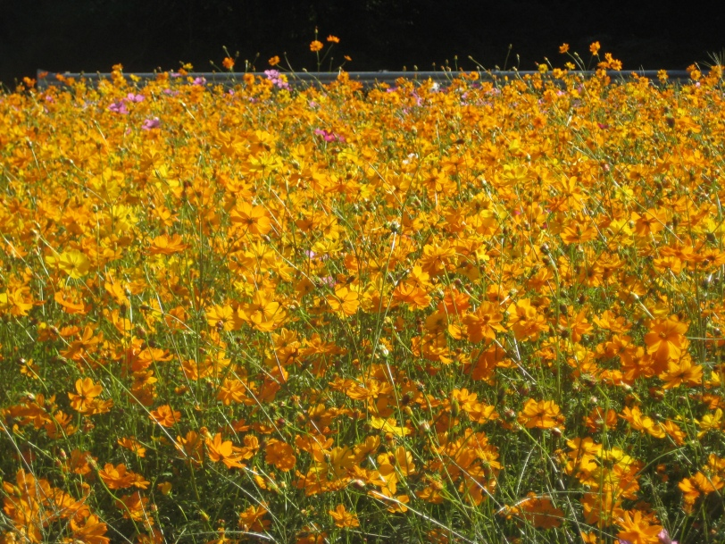 wild flowers by the road