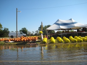 flooded streets, slowing down and seeing the beauty of the roadside market
