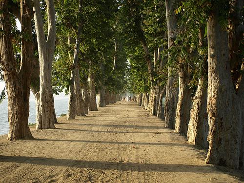 treelined-dirt-road-pak