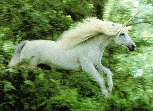 unicorntumblr_lzmbjyVBMb1r4irmqo1_500