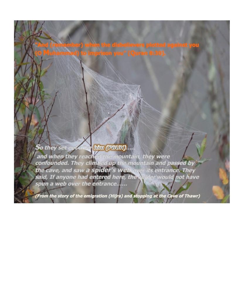 thawr spider web