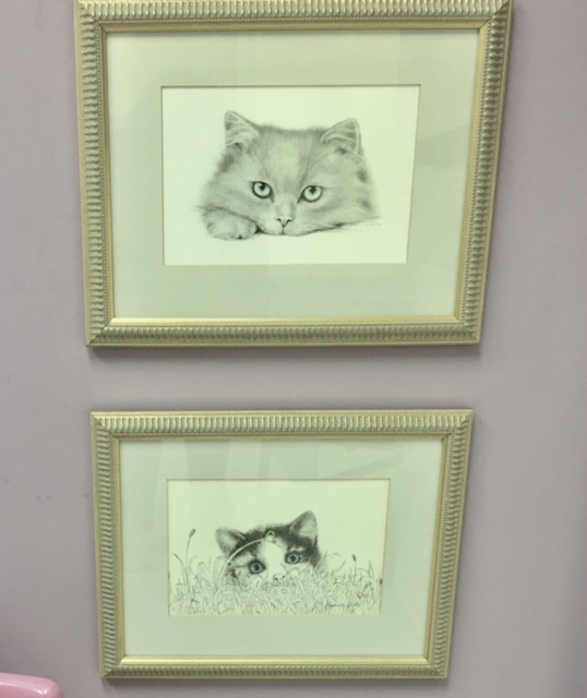 The kitties in the inspiration exam room