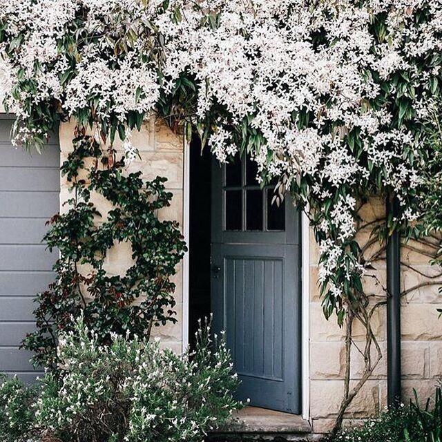 jasmine17fa4b7725abc905ecf4b295c56a49e9--blossom-garden-flower-blossom